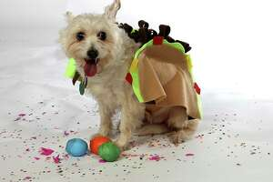 Penny models a homemade taco costume made out of felt pieces.