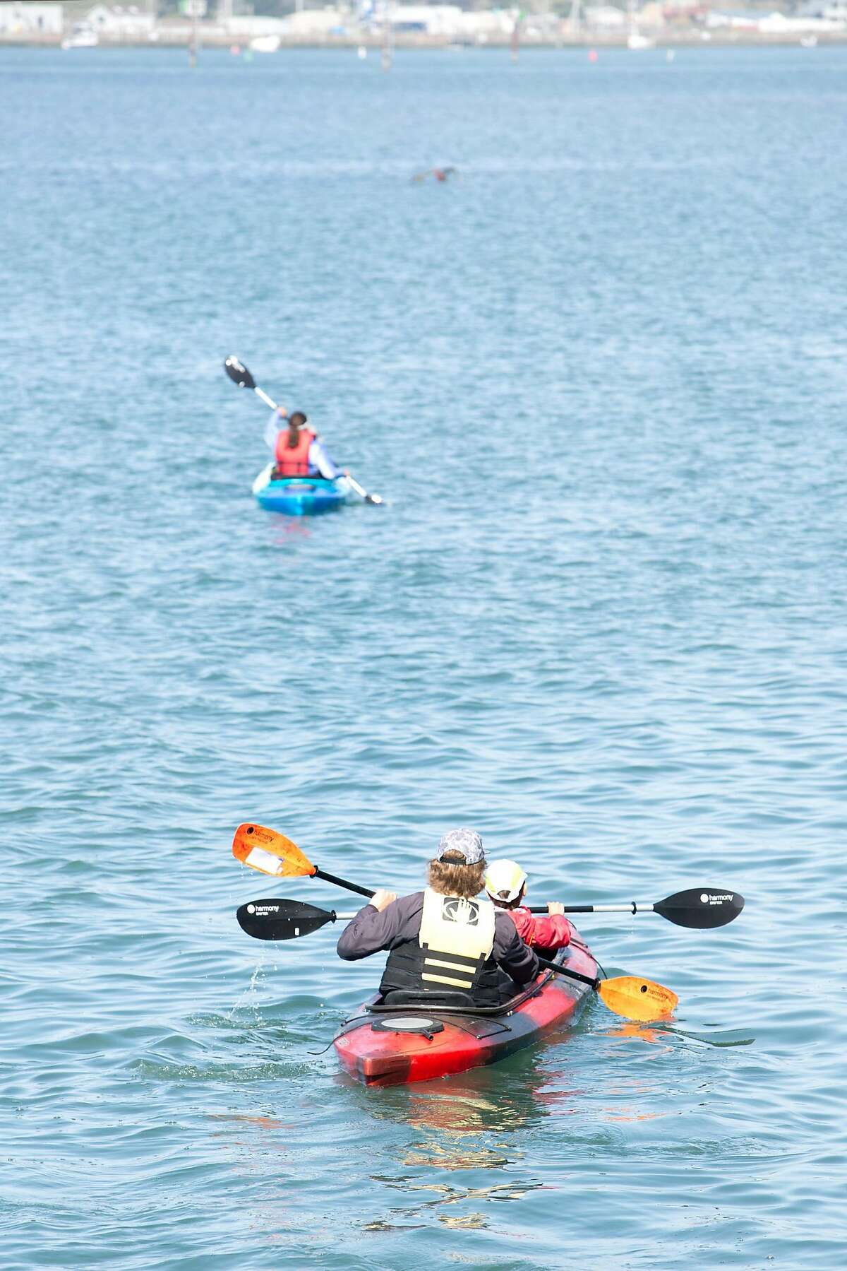 Bob Miller of Bodega Bay Surf Shack takes small groups on kayak tours of the Bay.