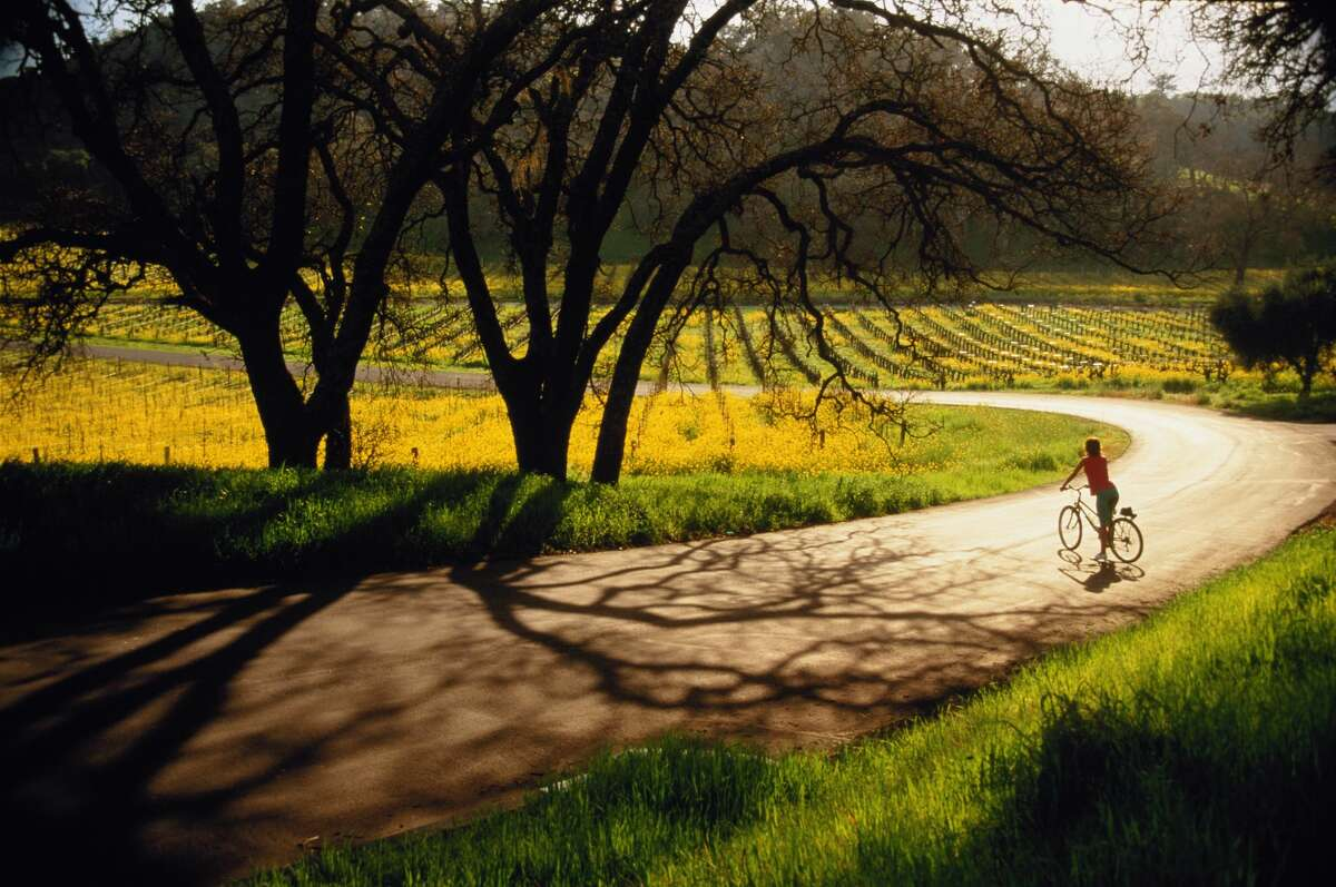 File photo of a biker in Napa Valley. One person was hospitalized and 30 others suffered from symptoms of hypothermia during the HITS Napa Valley triathlon in Napa County on Saturday morning.