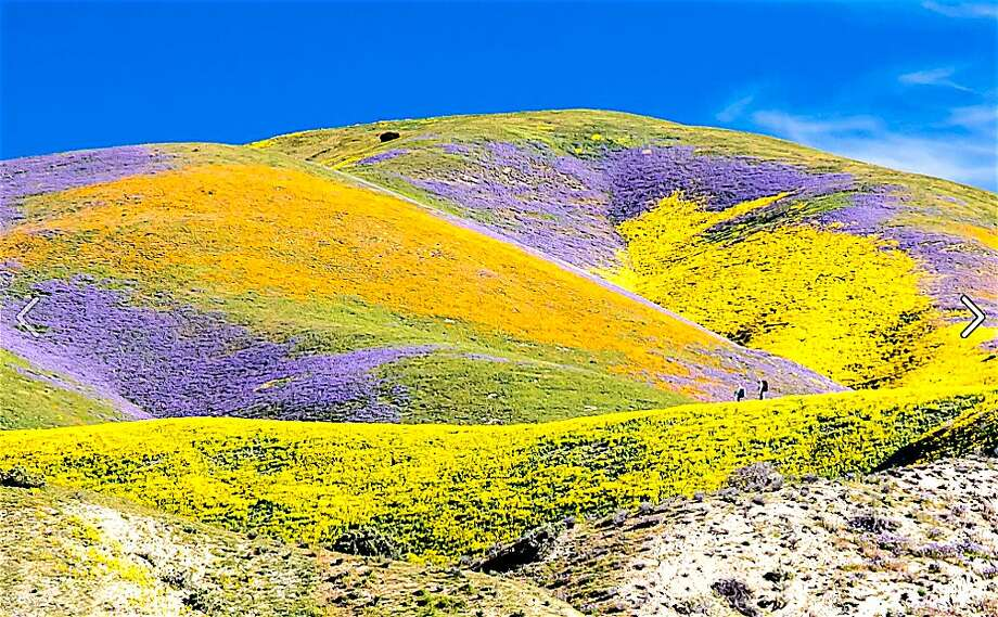 California's weird winter weather means wildflower season will be a big surprise