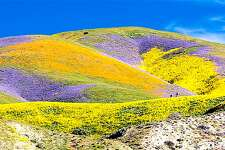 The Temblor Range at Carrizo Plain National Monument has the best wildflower blooms in California right now