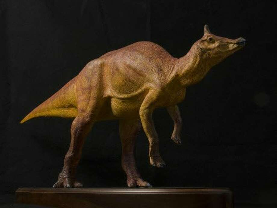 A sculpture of what scientists believe Augustynolophus probably looked like. Photo: Natural History Museum Of Los Angeles County