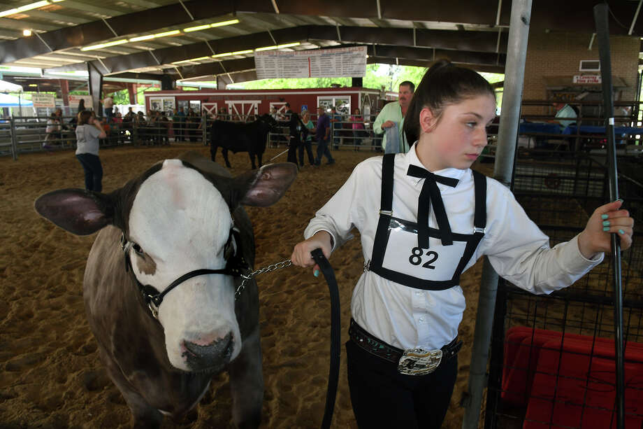 "Kyla Viereck, 14, a Twin Creeks Middle School 8th grader and a member of the Spring FFA, leaves the show ring with ""Smokey"", her Charolais and Chi Cross steer, after the Market Steer Showmanship Competition at the 66th annual Spring Livestock Show and Fair at Nagy Pavilion in Spring on April 7, 2017. (Phoro by Jerry Baker/Freelance) Photo: Jerry Baker, Freelance / Freelance"