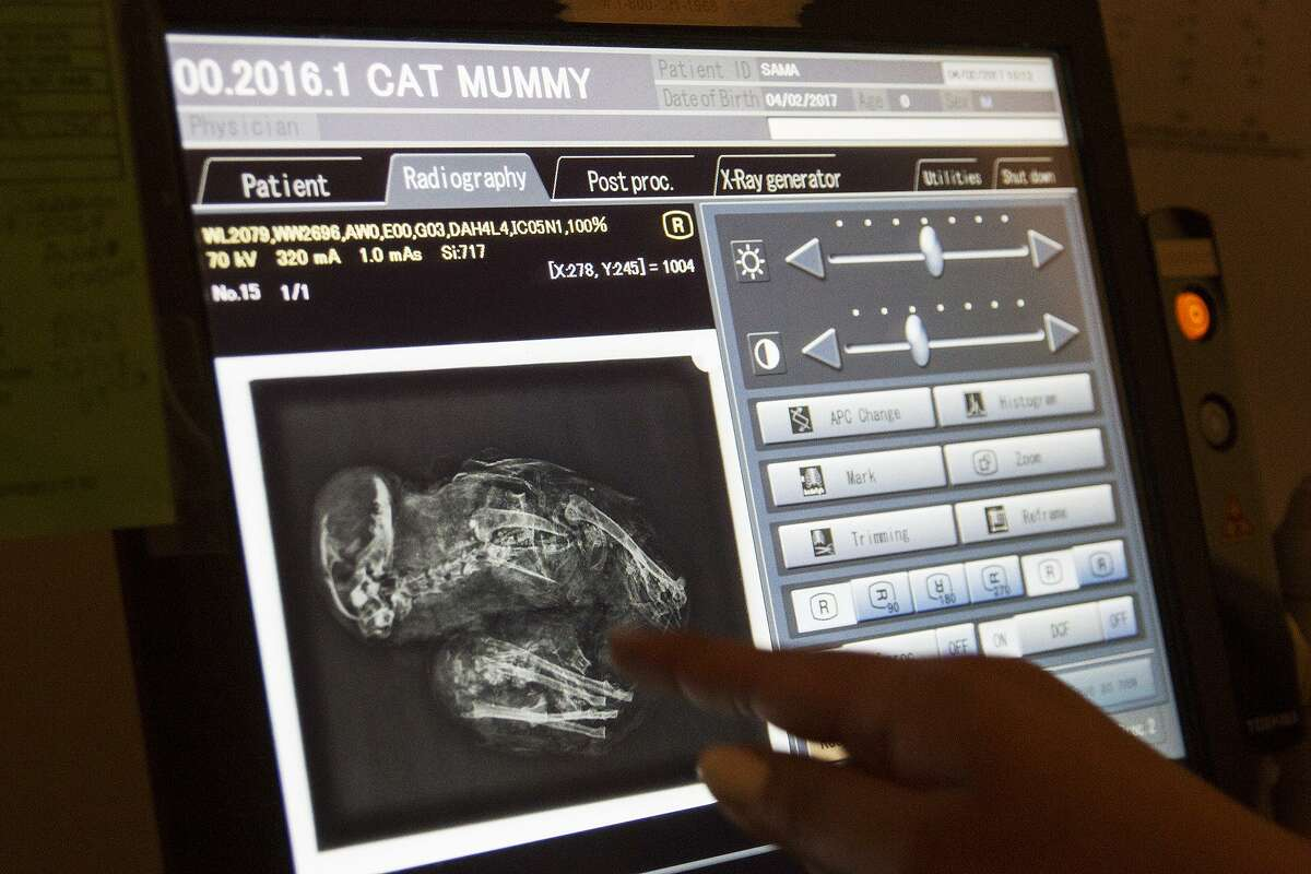 X-ray of a mummy of what was believed to be a cat, but turned out to be a jackal, most likely, at UT Health San Antonio Medical Arts & Research Center.