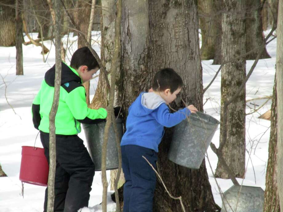 Caiden Blanchard and Louis Martin, ages 6 and 4, collect sap at a family friend?s backyard sugarbush in Averill Park. They are the grandsons of Carolyn McLoughlin, whose friend, Ellie Matthews, uses the sap buckets formerly used on the farm she grew up on in Vermont. This year they set up 47 taps. (Carolyn McLoughlin) Photo: Picasa