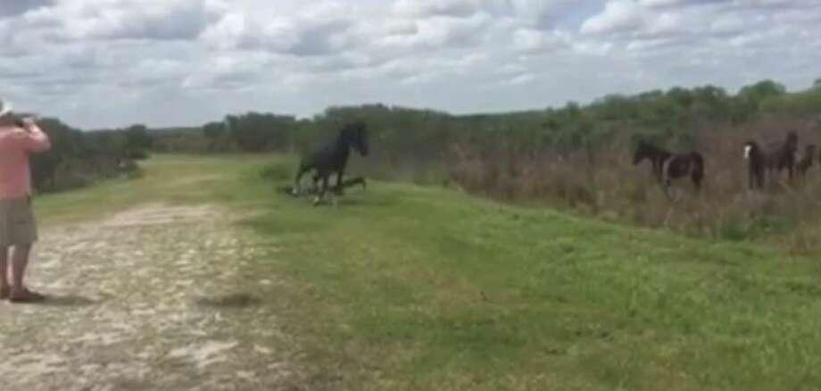 Video captures horse battling gator at Florida park Photo: Media: Jukin Screen Grab