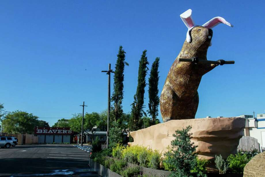 Created by veteran sculptor David Adickes and sign artist Melissa Eason, The Beaver dons seasonally appropriate headgear in front of a new restaurant and bar on Westheimer. Photo: Gary Fountain, Gary Fountain/For The Chronicle / Copyright 2017 Gary Fountain