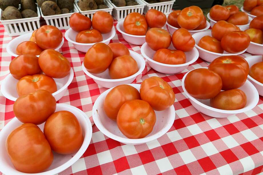 There is still time to plant tomato transplants in the garden. Photo: Marvin Pfeiffer /For The Express-News / Express-News 2017