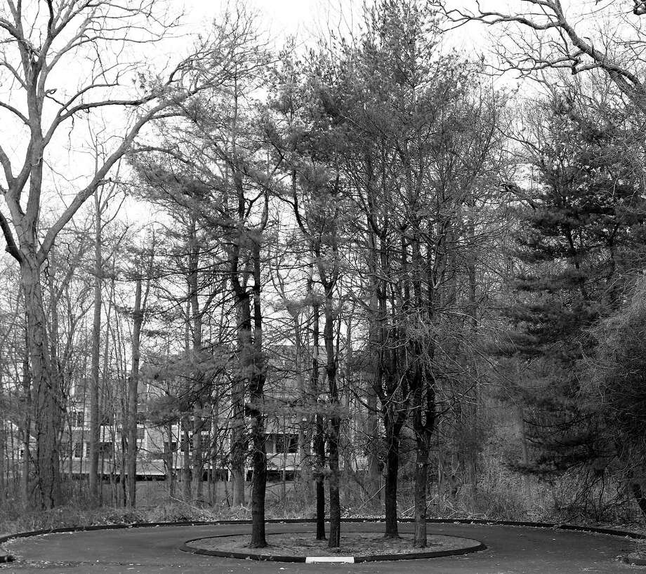 Lonely trees in Darien, by the school board's central office on April 3. Photo: Erin Kayata / Hearst Connecticut Media / Darien News