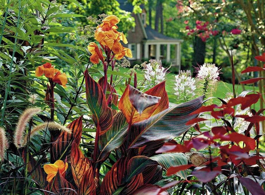 'Tropicanna' adds brilliant color and texture to this mixed flower border. Photo: HANDOUT, HO / SOUTHERN LIVING