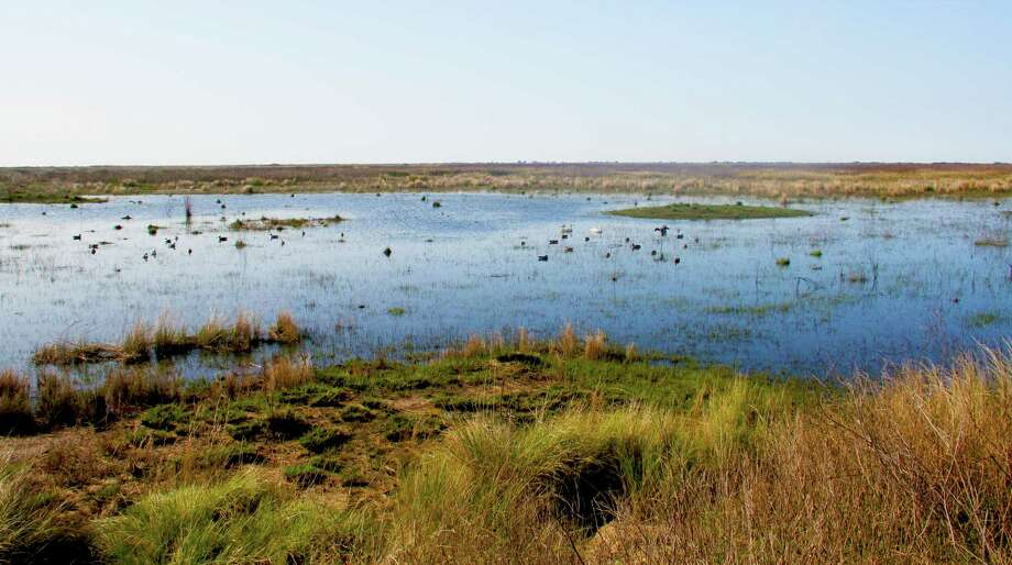 Another of our research questions: Can wetlands trap carbon? (Here: The Sabine Ranch in Jefferson County.) Photo: Shannon Tompkins, Houston Chronicle