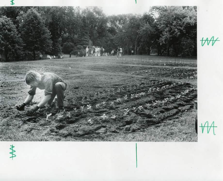 Lonnie Finney plants a bed of marigolds at Dow Gardens. June 1975 Photo: Daily News File Photo