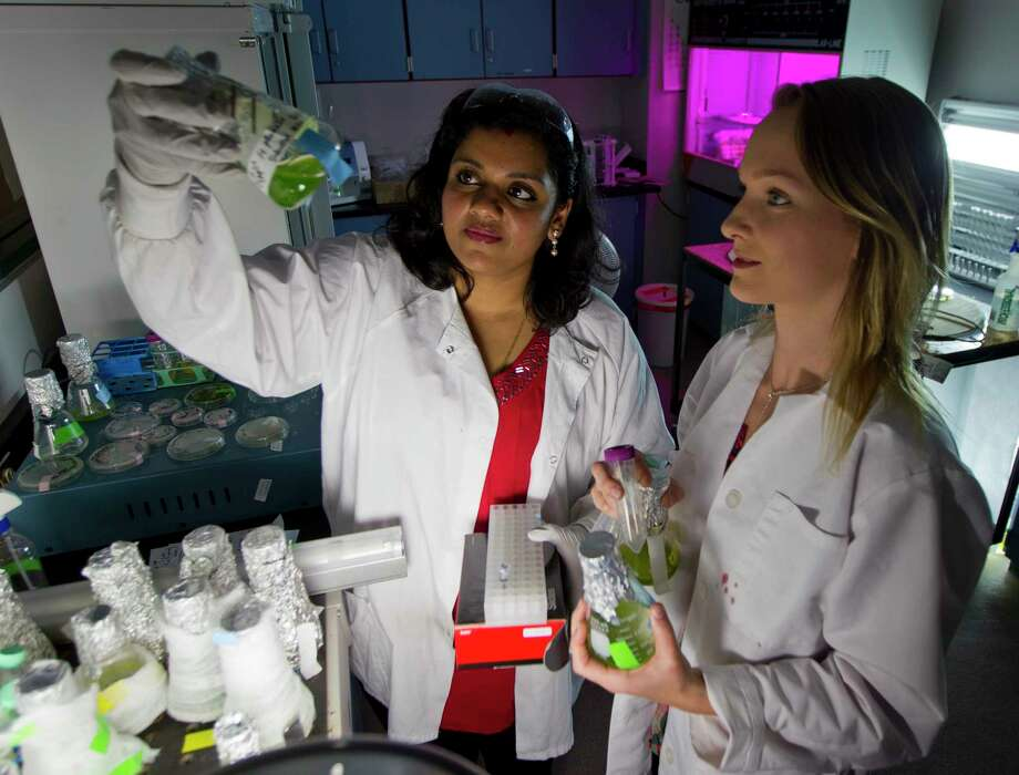 Vasupradha Vasudevan, a student at Lone Star College-Montgomery, looks at algae samples with biotechnology intern Lorna Brewer, in Conroe. Vasu is working with algae to stress lipids, which has been shown to help boost the immune system and has been used to fight cancer or other inflammatory diseases. Vasu recently was chosen to present two of 25 research projects from across the country at the 2017 National Conference on Undergraduate Research. She was the only community college student chosen to present in the Molecular Biology category. Photo: Jason Fochtman, Staff Photographer / © 2017 Houston Chronicle