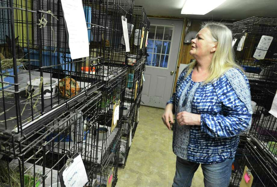 "Linda Thibault, Founder of Hop-A-Long Hollow in Norwalk Conn. takes care of nearly 75 rabbit's on Thursday April 6, 2017 that her organization hopes to rehabilitate and re-home the abandoned and neglected animals into ""forever homes"". Photo: Alex Von Kleydorff / Hearst Connecticut Media / Norwalk Hour"