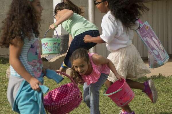 Children search for eggs 04-15-17 at the Easter Egg Hunt outside Alamo Heights Baptist Church. Tim Fischer/Reporter-Telegram