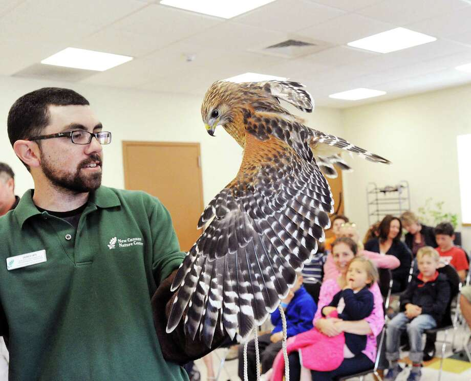 Wildlife educator Derick Hips of the New Canaan Nature Center displays a Red-shoulder Hawk during a wildlife class taught by Hips at the Greenwich Animal Control, Greenwich, Conn., Saturday morning, April 15, 2017. Hips said the purpose of the class was to educate people about local wildlife so that humans and wild animals could better co-exist. Photo: Bob Luckey Jr. / Hearst Connecticut Media / Greenwich Time