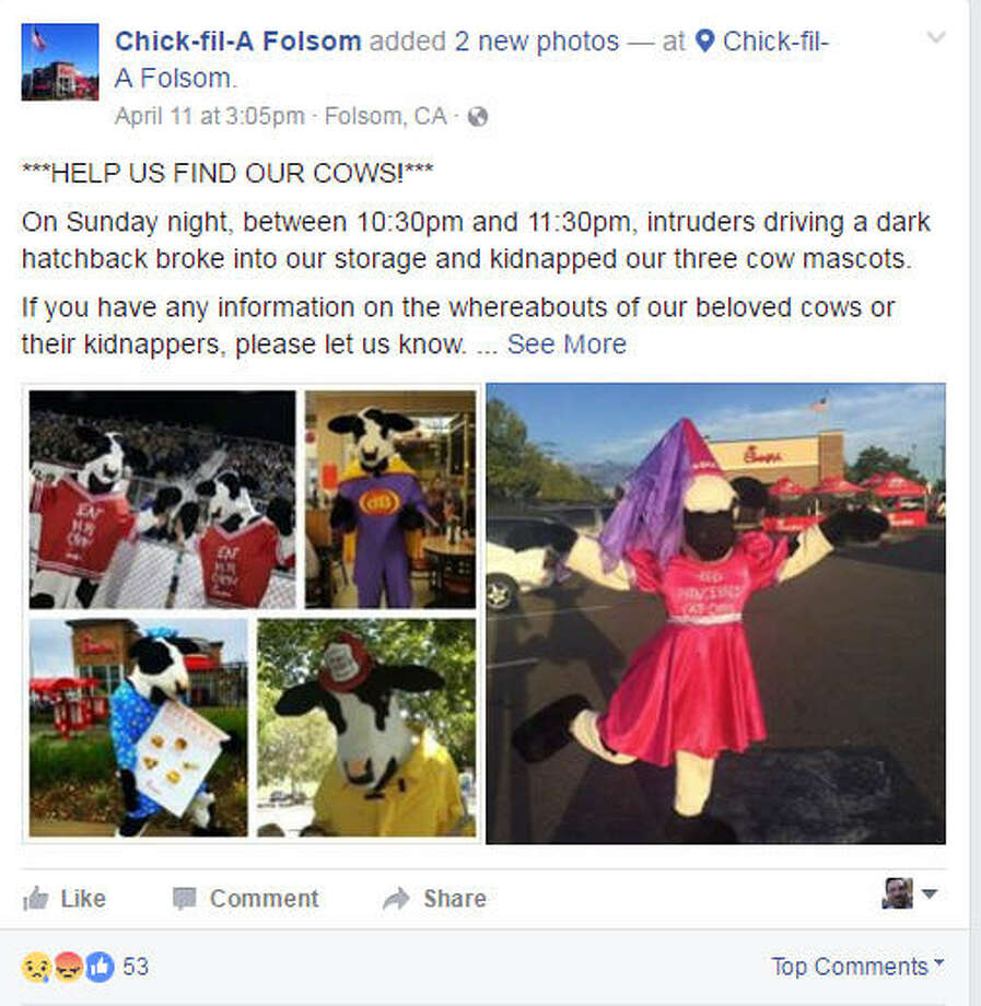 "Someone made off with the popular cow costumes used by the fast food chain Chick-fil-A. The bovine-wear was taken last week from a storage shed outside a restaurant in Folsom, Calif. The restaurant just wants the costumes back, posting on Facebook ""HELP US FIND OUR COWS!""Scroll through the gallery to see Pop Culture costumes that went wild in 2016 Photo: Facebook"