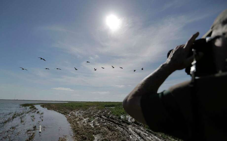 Local environmentalist Jim Olive takes photos of a pod of Pelicans near Christmas Bay.  Photo: Elizabeth Conley, Staff / © 2017 Houston Chronicle