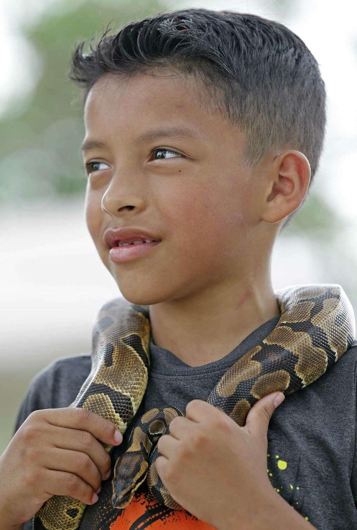Ethan Estrada, 9, holds his pet python