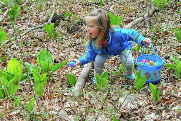 """Kayleigh Stein, 2, of Fairfield, grabs a hidden Easter egg during the Audubon Society Center at Fairfield's """"Egg Hunt Egg-Stravaganza"""" event in Fairfield, Conn., on Saturday Apr. 15, 2017. As many as 500 people came out to take part in the hunt, which took visitors along the scenic trails behind the center. Volunteers from the National Charity League's Easton and Fairfield Chapters came to help stuff the Easter eggs with surprises and crafts were held inside along with a visit from the Easter Bunny himself."""