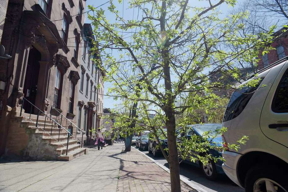 A view of some of the trees along Ten Broeck Street on Tuesday, April 18, 2017, in Albany, N.Y. (Paul Buckowski / Times Union) Photo: PAUL BUCKOWSKI / 20040301A