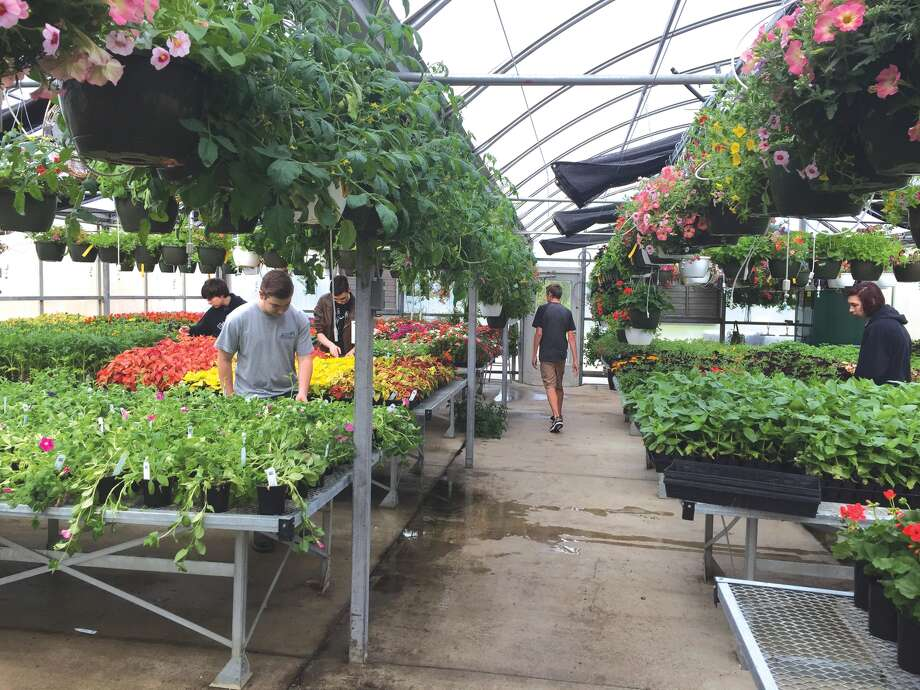 The EHS Horticulture class will have their annual Spring Plant Sale at the EHS Greenhouse (located at the EHS Sports Complex) Saturday from 8 a.m. to 2 p.m. or until they sell out.  This is a popular event with over 40,000 beautiful plants, primarily annuals, available for purchase. But stop by early because last year they sold out in three hours.  Money raised from the sale of the plants funds next year's greenhouse as well as the refurbishing of landscaping areas around the district's buildings by the EHS turf management class. Photo: Julia Biggs • Intelligencer