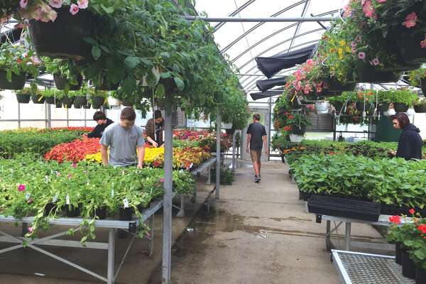 The EHS Horticulture class will have their annual Spring Plant Sale at the EHS Greenhouse (located at the EHS Sports Complex) Saturday from 8 a.m. to 2 p.m. or until they sell out. This is a popular event with over 40,000 beautiful plants, primarily annuals, available for purchase. But stop by early because last year they sold out in three hours. Money raised from the sale of the plants funds next year's greenhouse as well as the refurbishing of landscaping areas around the district's buildings by the EHS turf management class.