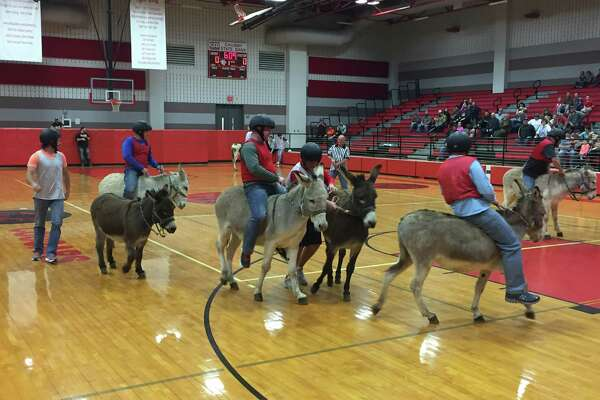 A Montgomery County animal rights activist is concerned over donkey basketball, as seen in this file photo, scheduled tonight a Splendora Junior High as a fund raiser for Project Graduation.