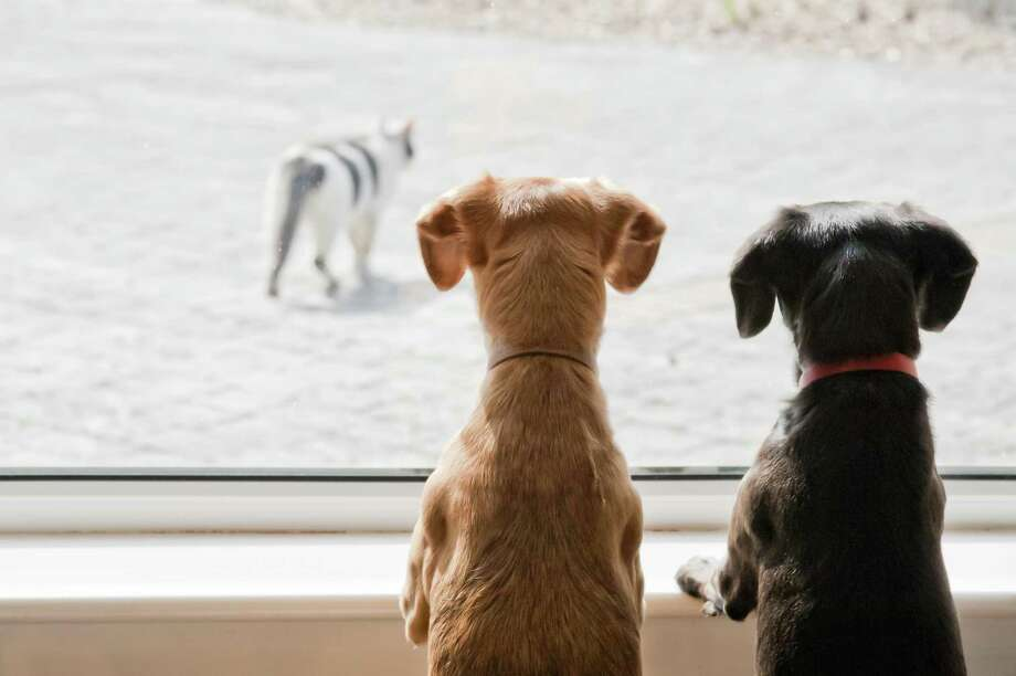 In the minds of dogs, their barking successfully keeps people away, and they will always continue a behavior that gets results unless you train them otherwise. Reward them for leaving the window and ceasing to bark. Photo: Dageldog /Getty Images / CountryStyle Photography