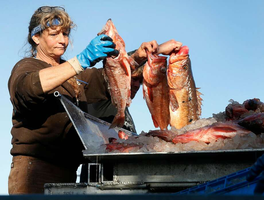 Crew member of the fishing vessel Pioneer, Joleen Lambert-Skinner, unloads a catch of bocaccio rock fish at Pier 47 in San Francisco, Calif. on Thursday, April 20, 2017. The Port of San Francisco has decided to allow fishers to sell direct to the public for a one-year trial period, beginning immediately. Photo: Paul Chinn, The Chronicle