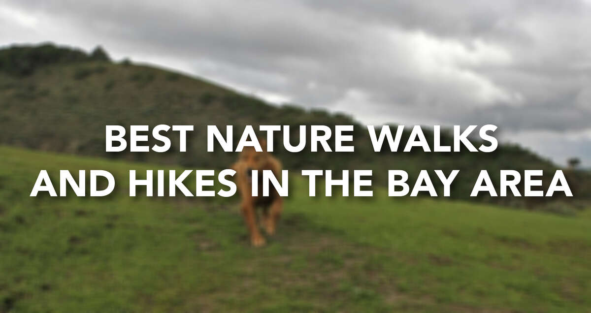 Check out some of the best hikes and nature walks in the Bay Area.