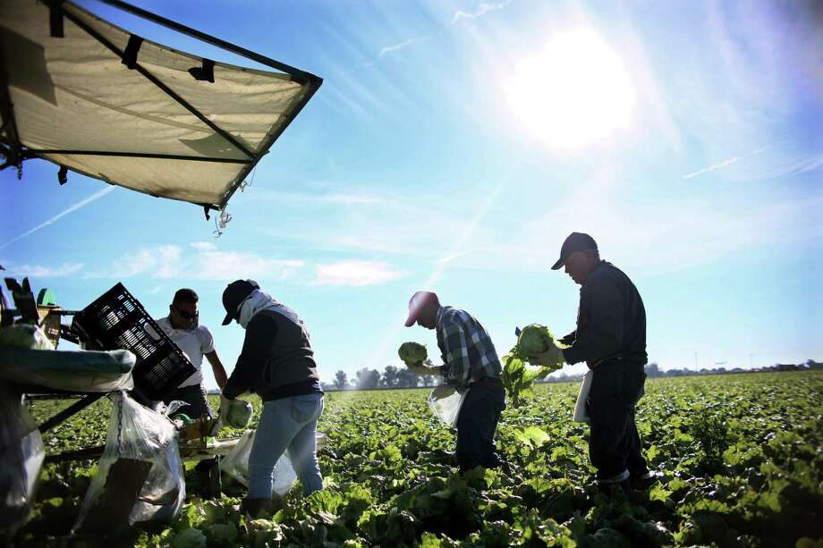 Workers harvest lettuce in a field outside of Brawley, Calif., in the Imperial Valley. An abundance of rain this year has ended up squeezing U.S. salad supplies after warmer weather meant an early end to the winter growing season. Heavy rains then delayed planting. Photo: SANDY HUFFAKER, Stringer / AFP or licensors