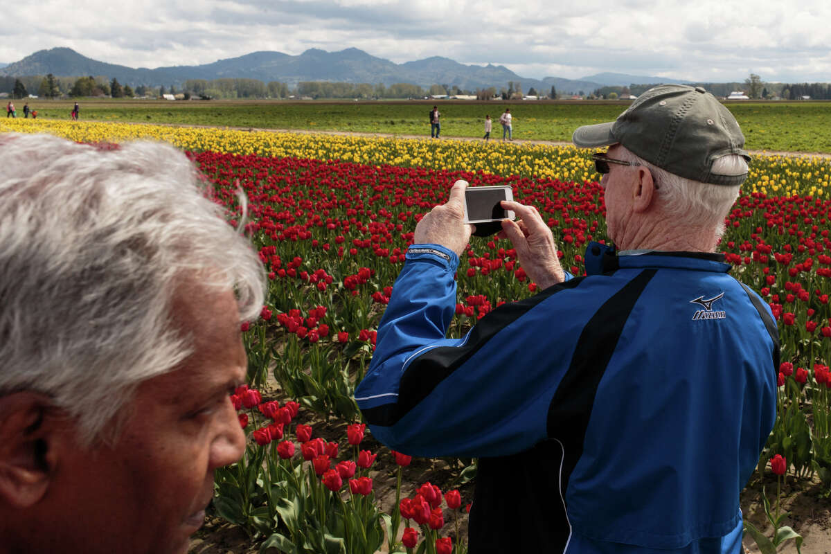 Tourists enjoy arrangements of exotic tulips at the Roozengaarde at the Skagit Valley Tulip Festival on Thursday, April 20, 2017. The tulips festival finishes up at the end of April.