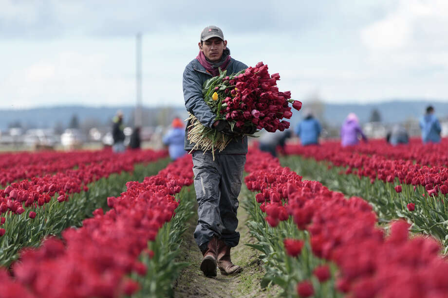 The median income of an American worker in 2016 was $45,860, up $1,041 from 2015, according to recently released U.S. Census Bureau figures. Take a look at where Washington workers are gaining or losing ground when it comes to income. Photo: GRANT HINDSLEY, SEATTLEPI.COM / SEATTLEPI.COM