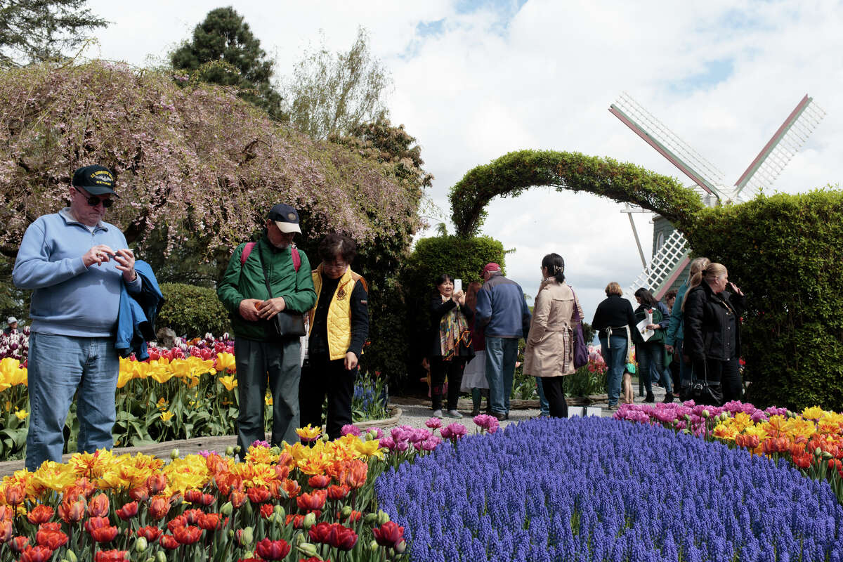 Tourists enjoy tulips and other flowers at the Roozengaarde at the Skagit Valley Tulip Festival on Thursday, April 20, 2017. The tulips festival finishes up at the end of April.