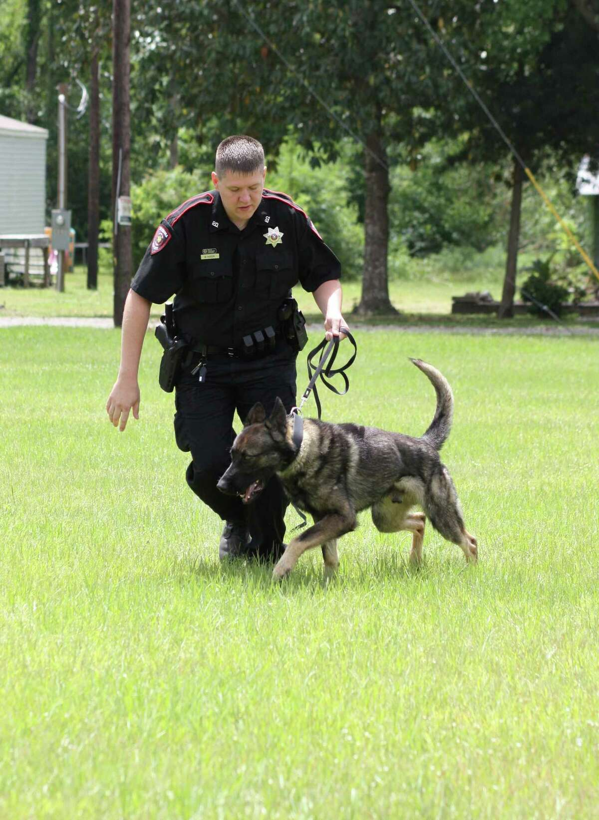 Splendora Police Officer Ray Hardin exercises his K-9 partner, A.D. The two were paired up a week ago and have a few more weeks of training ahead before they can begin conducting narcotics interdiction on US 59.