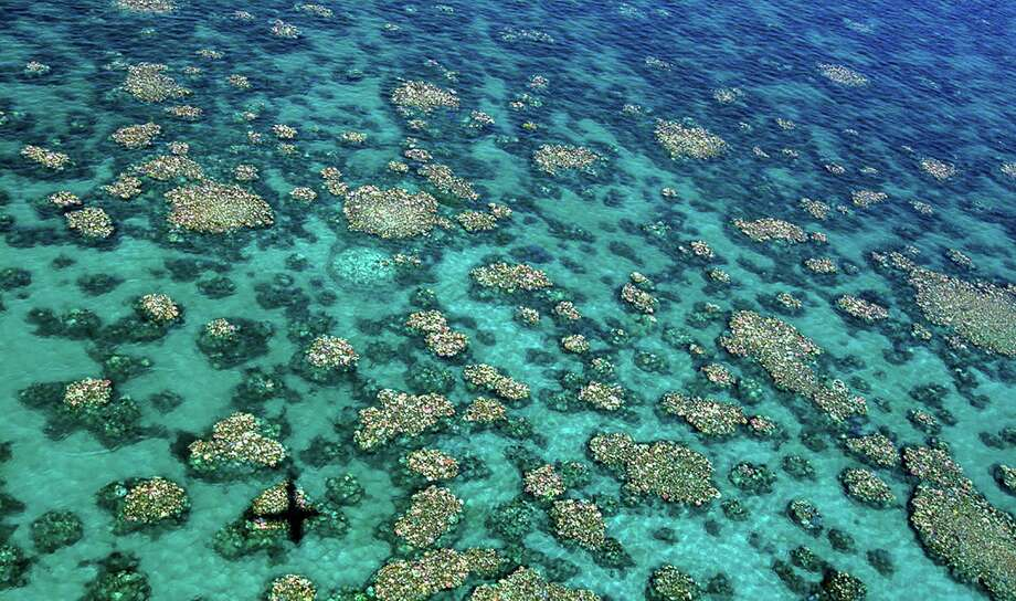 "Coral has been bleached for two consecutive years by warming sea temperatures on Australia's Great Barrier Reef with ""zero prospect"" of recovery, scientists said on April 10, blaming climate change for the large-scale destruction. Photo: ED ROBERTS /AFP /Getty Images / AFP or licensors"