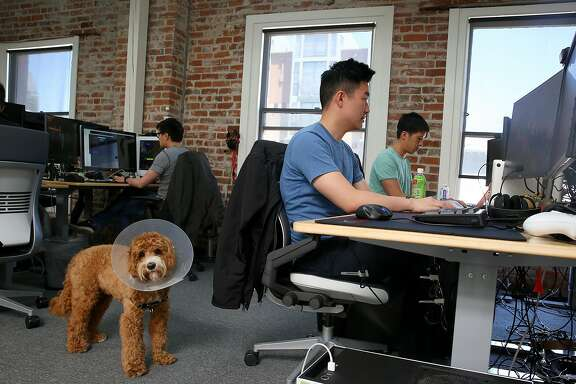 Software engineer Sitong Peng (right) works at Forge, a video game company, on Friday, April 21, 2017, in San Francisco, Calif.  At left is Tusk.
