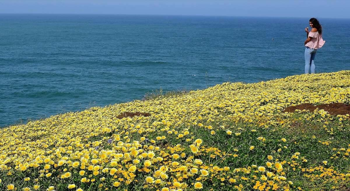 If you got bored looking at flowers, you could scan the Pacific for whales. Unfortunately, there were no spouts to be seen Sunday morning.