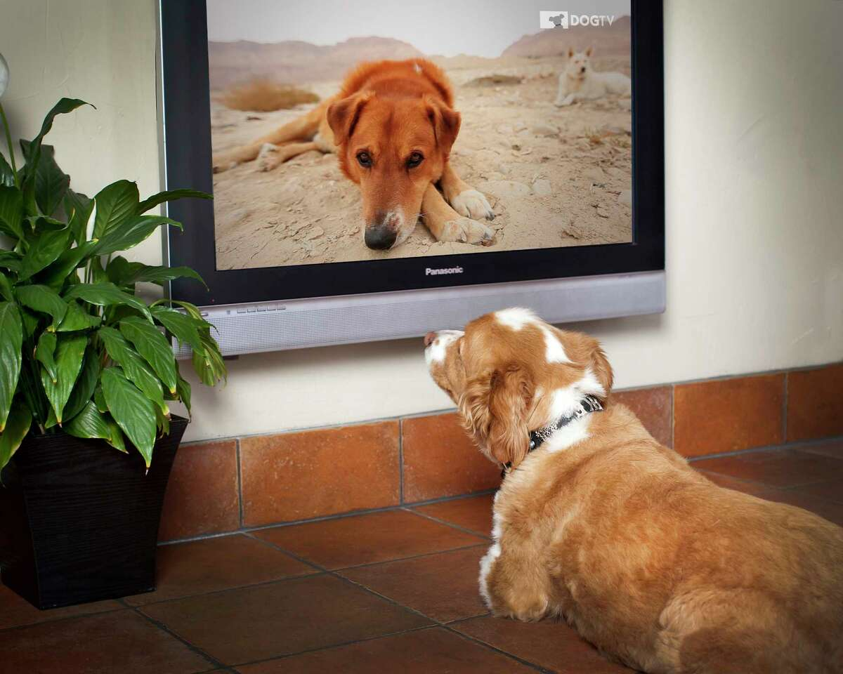 30 percent of Netflix users have a profile for watching with their pet Source: Netflix