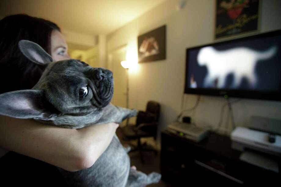 Netflix surveyed 50,000 users in 27 countries to find out who is binge watching with their pets and how. Here are the results... Photo: Gregory Bull, STF / AP