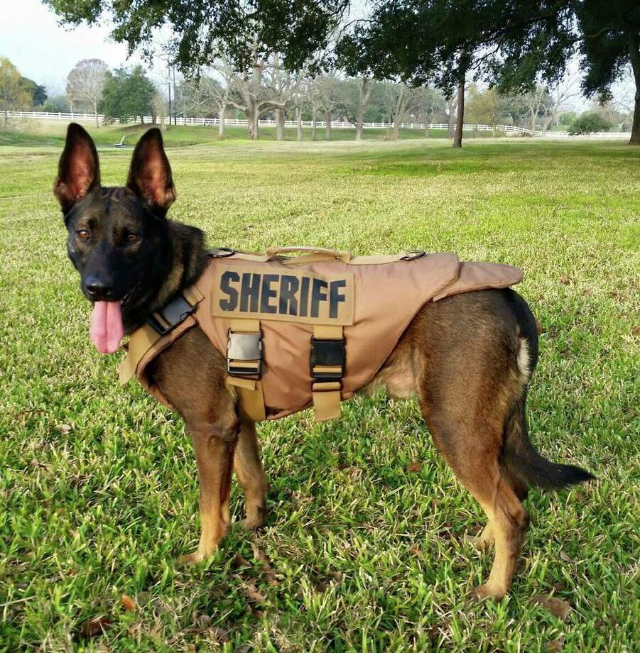 VenomousanimalsK9 Rudy, the Fort Bend County Sheriff's Office police dog, was recently bit by a venomoussnake but is expected to make a full recovery.Click through to see the most venomoussnakes, spiders and bugs in Texas.