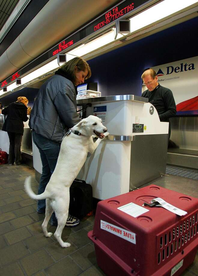delta is banning pit bulls from flying as service dogs and customersa passenger and her dog check in with a delta airlines employee at laguardia airport in