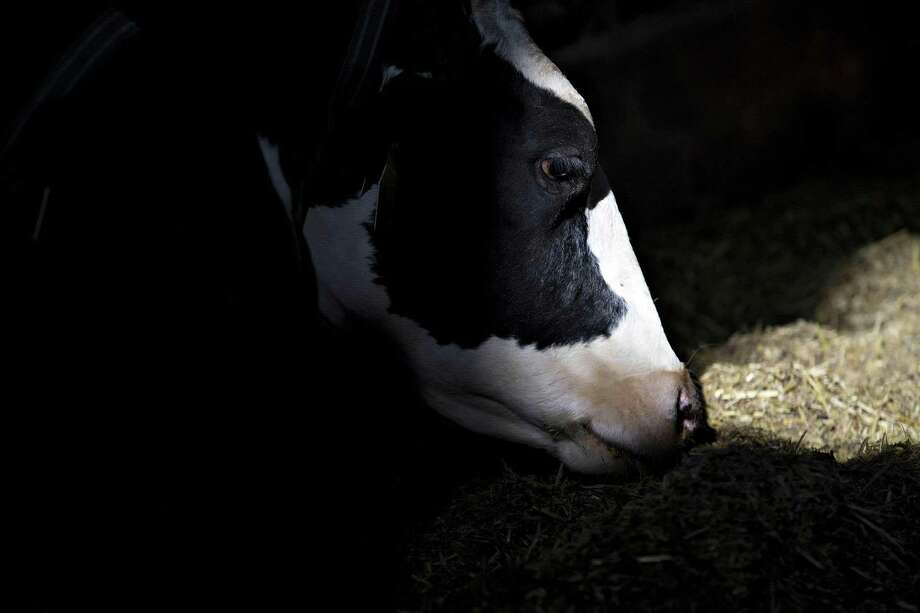 While most Americans probably aren't looking for skim milk powder at the supermarket, it's a major export product (along with nonfat dry milk) because it has low moisture content and a longer shelf life. The U.S. exports about 15 percent of its dairy production. Photo: Daniel Acker /Bloomberg News / © 2016 Bloomberg Finance LP
