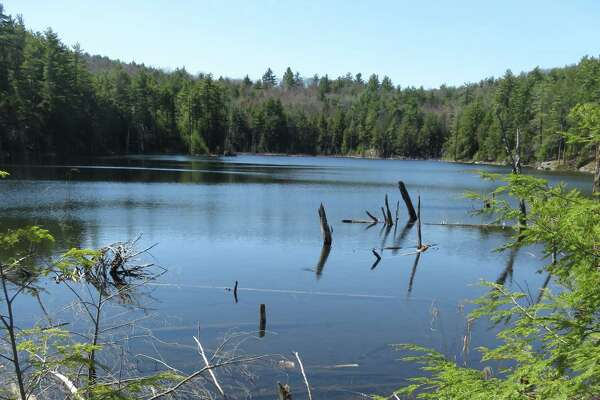 Rocky the dog looks out over the waters of Pole Hill Pond in the Lake George Wild Forest. (Herb Terns / Times Union)
