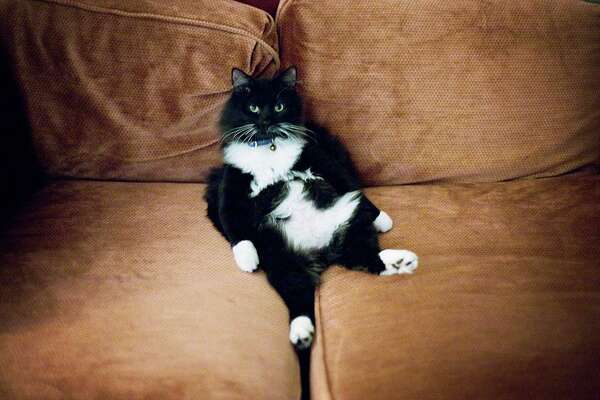 3of3Cleaning Cat Urine Odors Out Of Couch Is A Challenge.Photo: Sean Marc  Lee /Getty Images