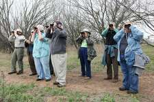 A group of bird watchers, hosted by the San Antonio Audubon Society, looks for specimens at the Land Heritage Institute in 2014.