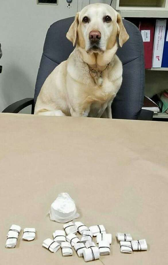 Cedar, the Milford police department's trained narcotics dog helped recover heroin thrown away by Anthony Parowski of Stratford during his recent arrest in the parking lot of a Milford motel. Photo: Contributed Photo / Contributed Photo / Connecticut Post Contributed