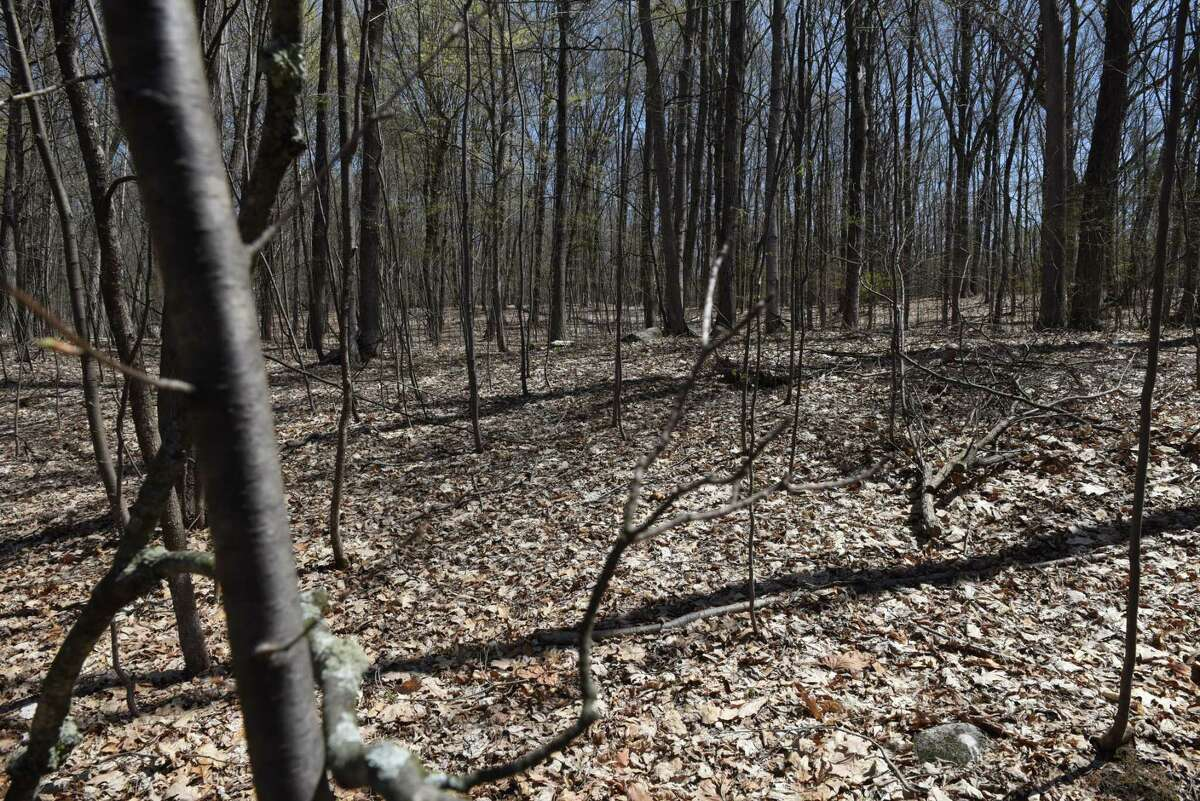 View of land on a proposed development on Hill Road on Monday, April 24, 2017, in Stillwater, N.Y. Neighbors are upset with developer John Witt?'s plans to clear cut trees from the property. They believe that it would create an ecological disaster for the lake and water table. (Will Waldron/Times Union)
