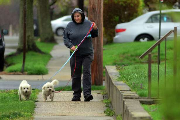 During a light rainfall, Kay McTiernan walks dogs Milo and Max along Charlton Street in Stratford, Conn. on Tuesday Apr. 25, 2017. McTiernan walks the dogs for her neice's dog walking business All My Lovin' out of Fairfield.